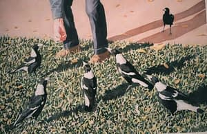 watercolour by Josonia Palaitis depicting six magpies being feed by hand on grass with prominent shadows and the legs and hand of a person wearing jeans