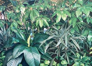 Oil painting by Josonia Palaitis featuring a lushious array of green plants in photorealistic style with the hint of an ocean horizon in the background through the leaves